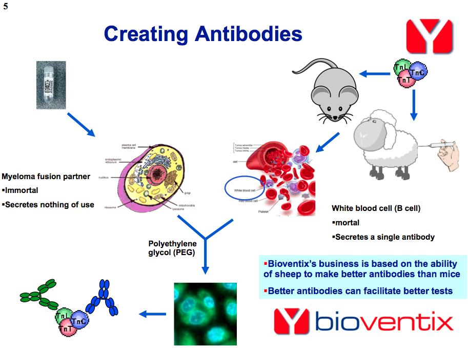 bvxp-antibody